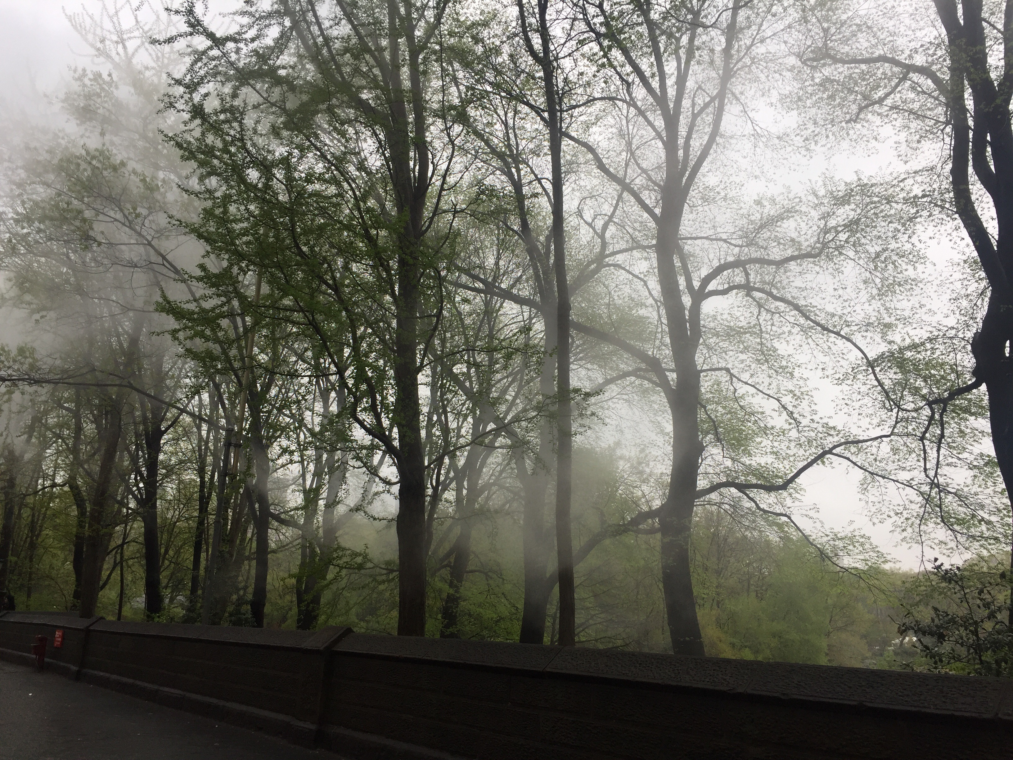 Beautiful low clouds flowing through Central Park